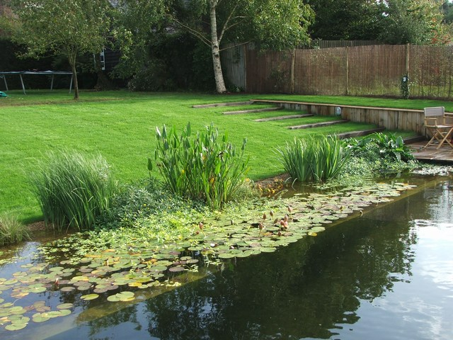 Anglo swimming ponds review our portfolio for Natural pond design